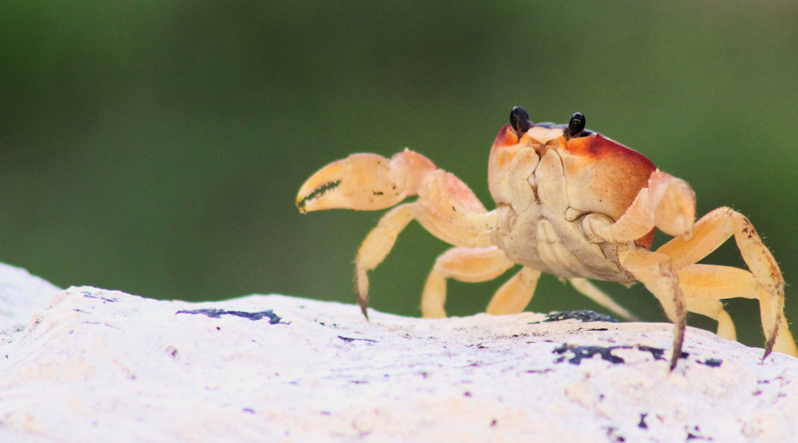 Crabby's Reef game for World Oceans Day